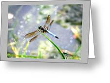 Dragonfly Portrait Greeting Card