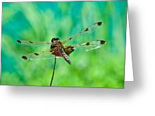 Dragonfly Rear Approach Greeting Card