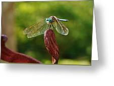 Dragonfly Resting II Greeting Card