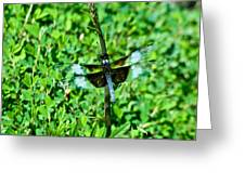 Dragonfly Resting On Stem Greeting Card