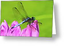 Dragonfly Resting Greeting Card