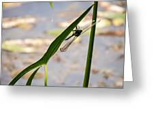Dragonfly Resting Upside Down Greeting Card