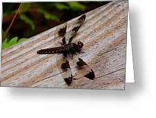 Dragonfly Spots Greeting Card