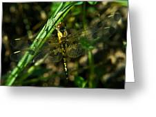Dragonfly Venation Revealed Greeting Card