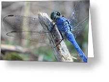 Dragonfly Wing Detail Greeting Card