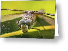 Dragonfly Wiping Its Eyes Greeting Card