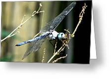 Dragonfly With Yellowjacket 1 Greeting Card