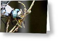 Dragonfly With Yellowjacket 2 Greeting Card