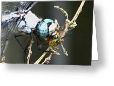 Dragonfly With Yellowjacket 3 Greeting Card