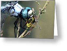Dragonfly With Yellowjacket 5 Greeting Card