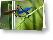 Dragoonfly Greeting Card