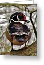 Drake Wood Duck 2 Greeting Card