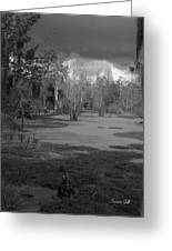 Drama In The Swamp II-black And White Greeting Card