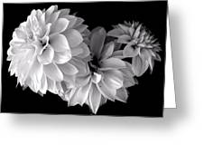 Dramatic Dahlias Greeting Card