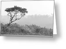 Dramatic Tree Greeting Card