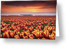Dramatic Tulips Greeting Card