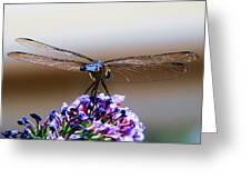Drangonfly On A Purple Flower Greeting Card
