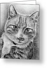 Drawing Of A Cat In Black And White Greeting Card