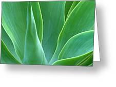 Dream Green Greeting Card