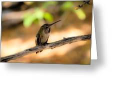 Dream Hummingbird Greeting Card