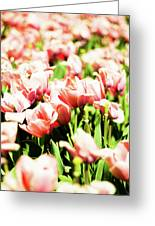 Dream Of Spring Greeting Card