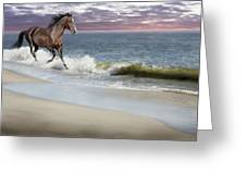 Dreamer On The Beach Greeting Card