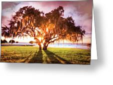 Dreaming At Sunrise Greeting Card