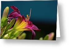 Dreaming In Technicolor Greeting Card