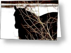 Dreaming Of Black Beauty Greeting Card