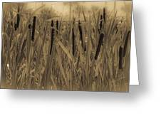 Dreaming Of Cattails Greeting Card