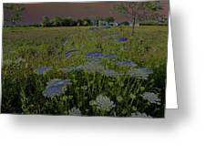 Dreaming Of Queen Annes Lace Greeting Card
