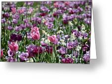 Dreaming Of Tulips Greeting Card