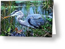 Dreamland Great Blue Heron Greeting Card