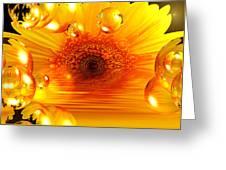 Dreams 2 - Gerbera Sunrise Greeting Card