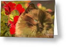 Dreamy Cat With Geranium 2015 Greeting Card