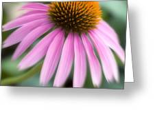 Dreamy Coneflower Greeting Card