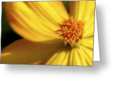 Dreamy Coreopsis Greeting Card