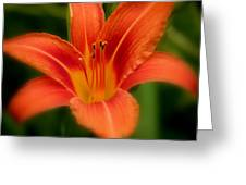 Dreamy Day Lily Greeting Card
