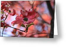 Dreamy Dogwood Greeting Card