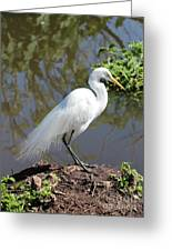 Dreamy Great Egret Greeting Card