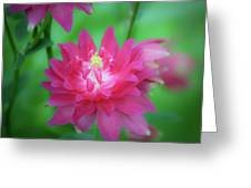 Dreamy Hot Pink Columbine Squared Greeting Card