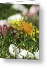 Dreamy Spring Greeting Card