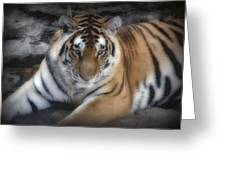 Dreamy Tiger Greeting Card