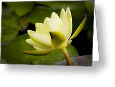 Dreamy Water Lilly Greeting Card