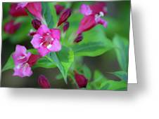 Dreamy Wigelia Greeting Card