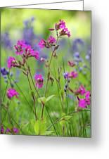 Dreamy Wildflowers Greeting Card