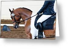 Dressage Show Horse Greeting Card