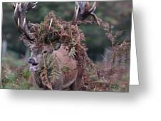 Dressed Red Stag Greeting Card