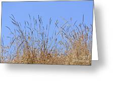 Dried Grass Blue Sky Greeting Card