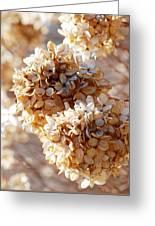 Dried Hydrangea Flowers  Greeting Card